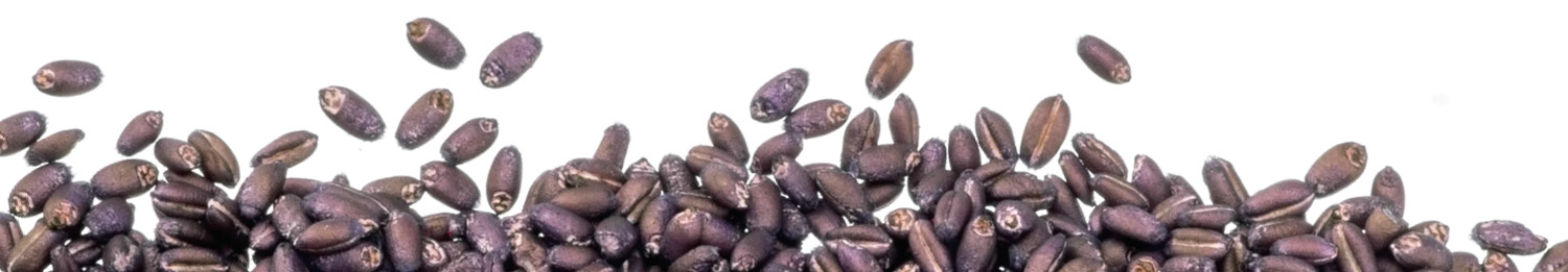Purple Treated Seeds